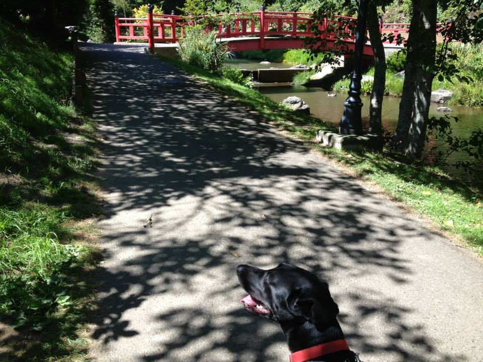 This image has an empty alt attribute; its file name is loki-at-mingus-park-aug-2013.jpg